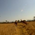 Evan van der Spuy (Mountain Biker) Taken Out by African Buck
