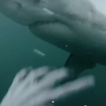 GoPro (Fake?) Cliff-Jumping Great White Shark Video
