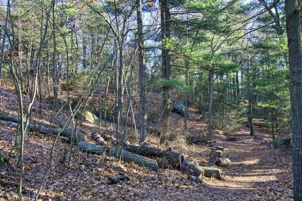 5 best day hikes near boston breakheart reservation trail
