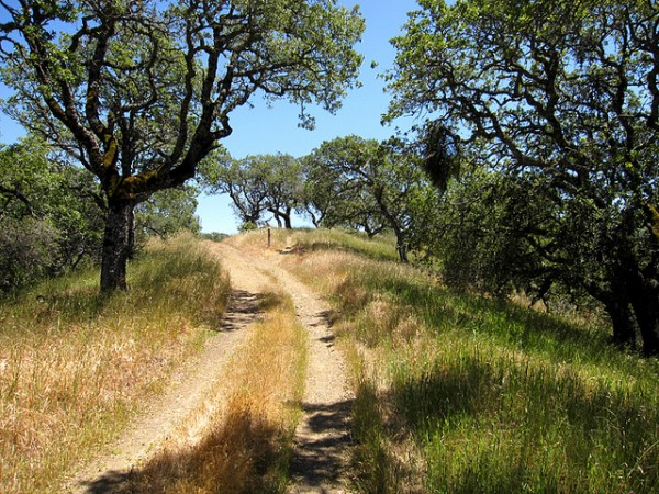 5 best mountain biking trails in san francisco henry coe state park jackson and dexter trails