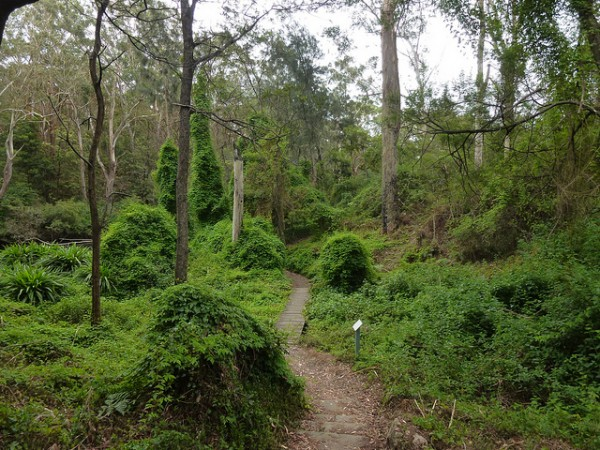 lane cove national park mountain biking trails in sydney