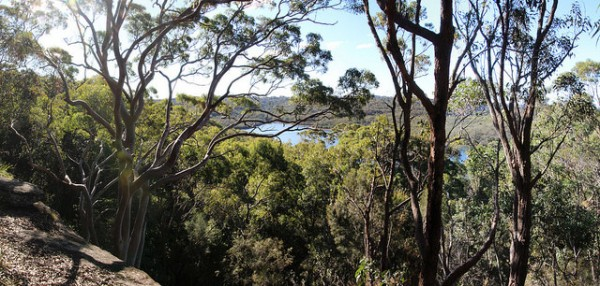 5 best mountain biking trails in sydney manly dam