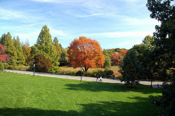arnold arboretum 5 best cycling routes in boston
