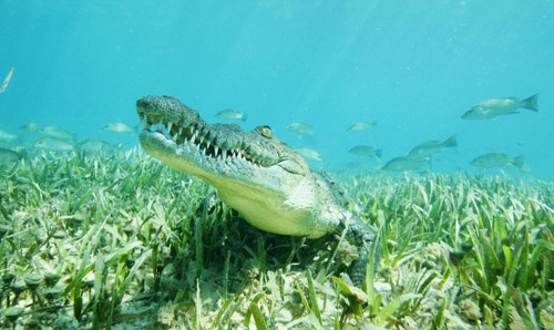 cuba-scuba-diving