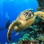 17 Incredible Scuba Diving Locations