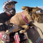 The Dirt Biking Dog: Meet Lexus