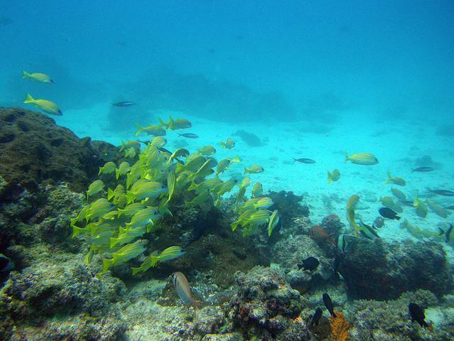 mnemba-island-scuba-diving